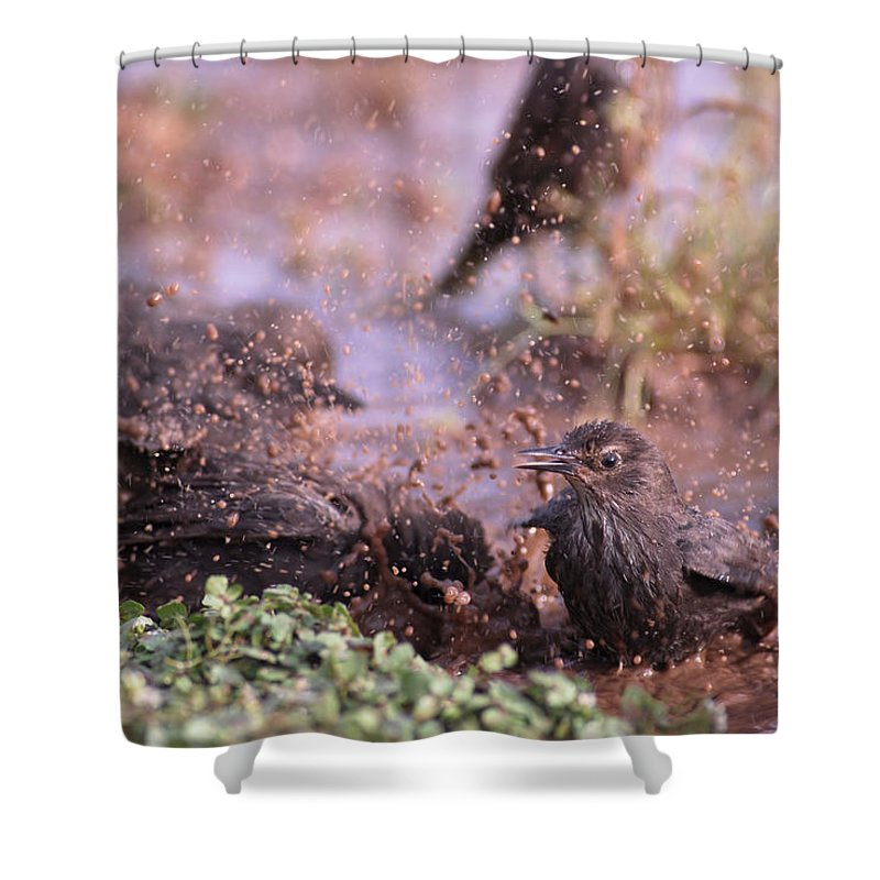 Birds Shower Curtain featuring the photograph Starlings Fight by Guido Montanes Castillo