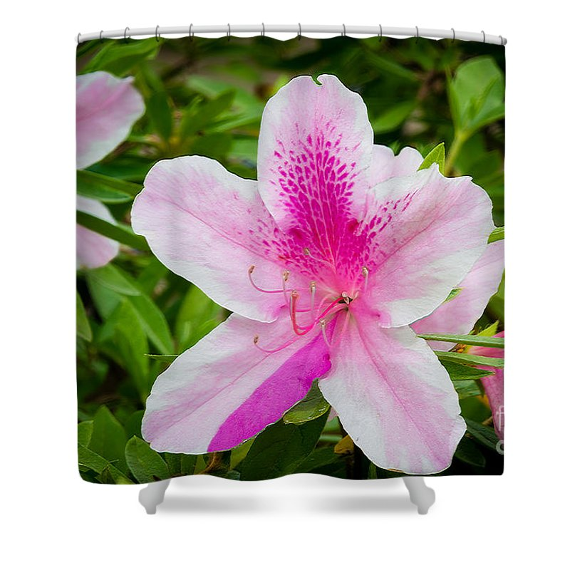 Nature Shower Curtain featuring the photograph Starry Nature by Elvis Vaughn
