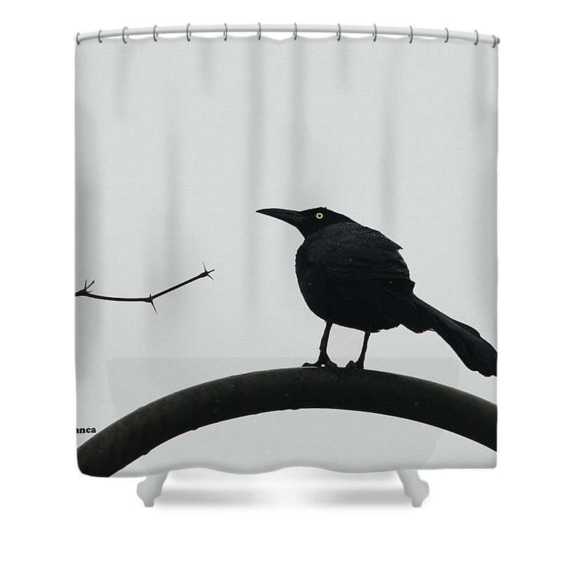 Stick-grackle And Bar Thats All Shower Curtain featuring the photograph Stick-grackle And Bar Thats All by Tom Janca