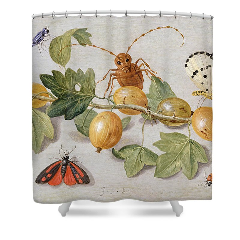 Gooseberry Shower Curtain featuring the painting Still Life Of Branch Of Gooseberries by Jan Van Kessel