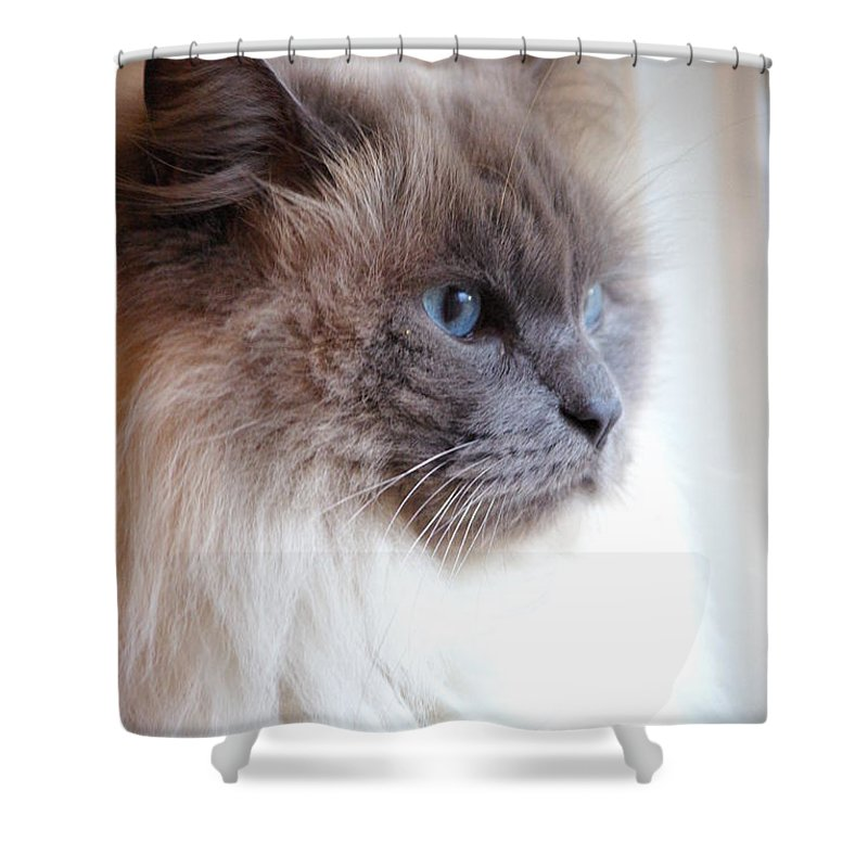 Cat Shower Curtain featuring the photograph Still Waiting by Cindy Johnston