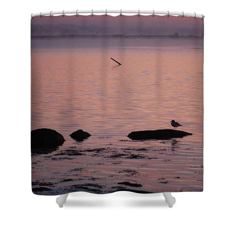 Stonington Harbor Shower Curtain featuring the photograph Stonington Sunrise by Amy Porter