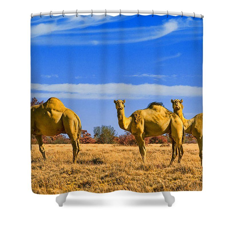 Feral Camels Shower Curtain featuring the photograph Stop And Stare V2 by Douglas Barnard