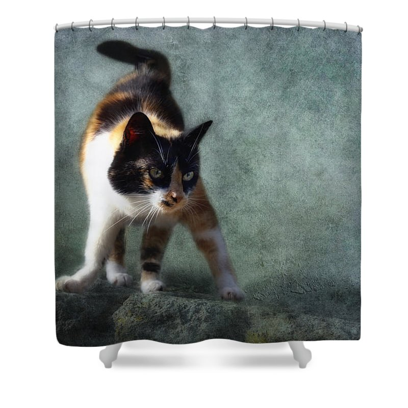 Cat Shower Curtain featuring the photograph Street Fighter by Claudia Moeckel