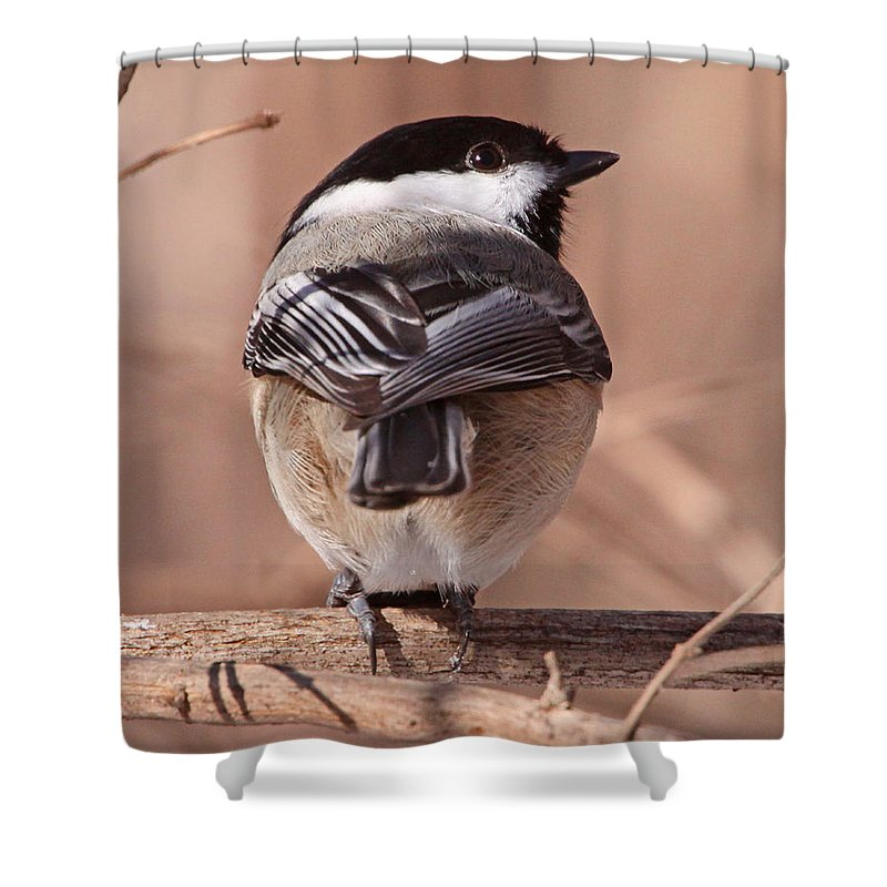 Nature Shower Curtain featuring the photograph Strike A Pose by Mike Dickie