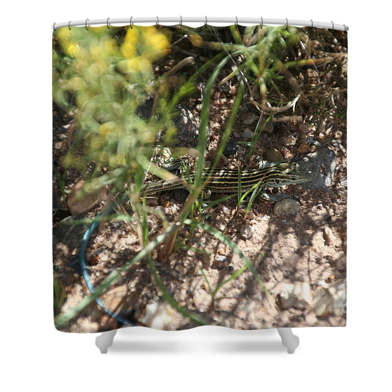 Lizzard Shower Curtain featuring the photograph Striped Cammo by Susan Herber