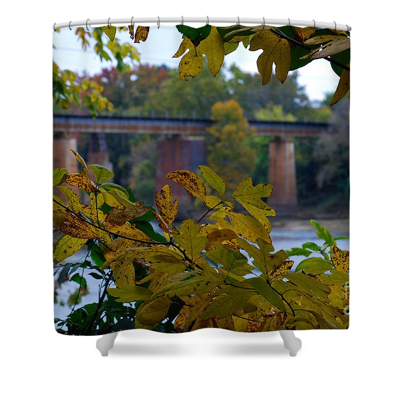 Scenic Tours Shower Curtain featuring the photograph Study In Chlorophyll by Skip Willits