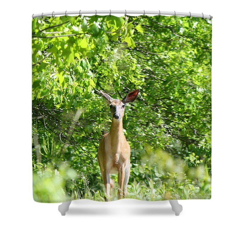 Wildlife Shower Curtain featuring the photograph Stumble Upon by Neal Eslinger