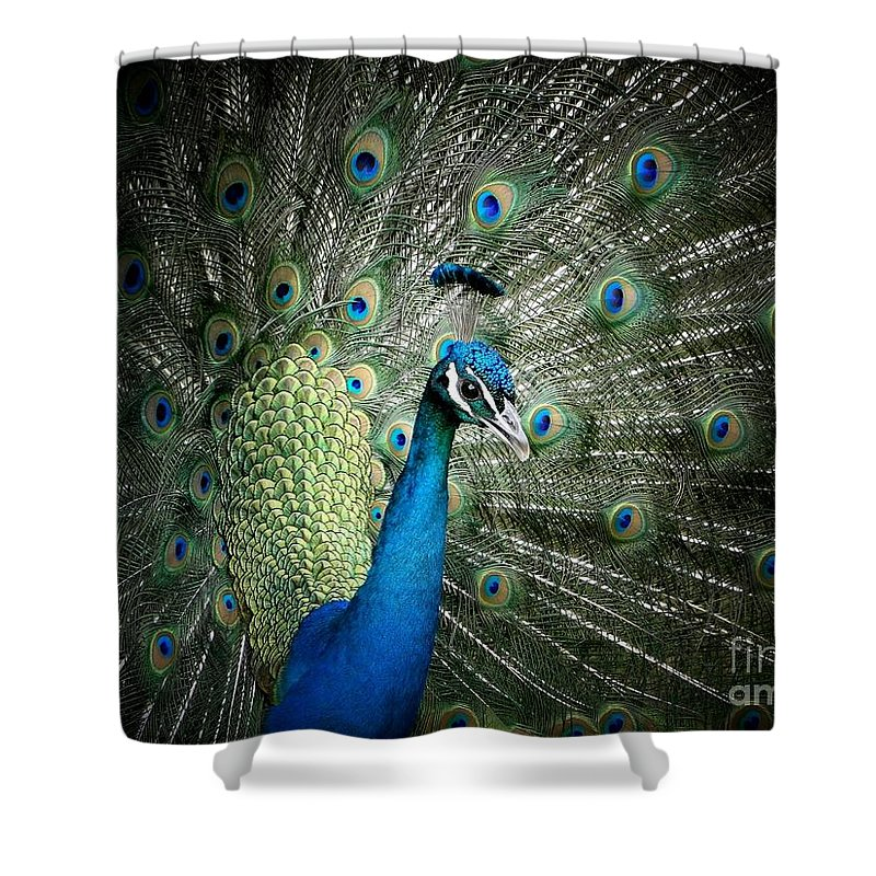 Peacock Shower Curtain featuring the photograph Stunning 1 by Ben Yassa