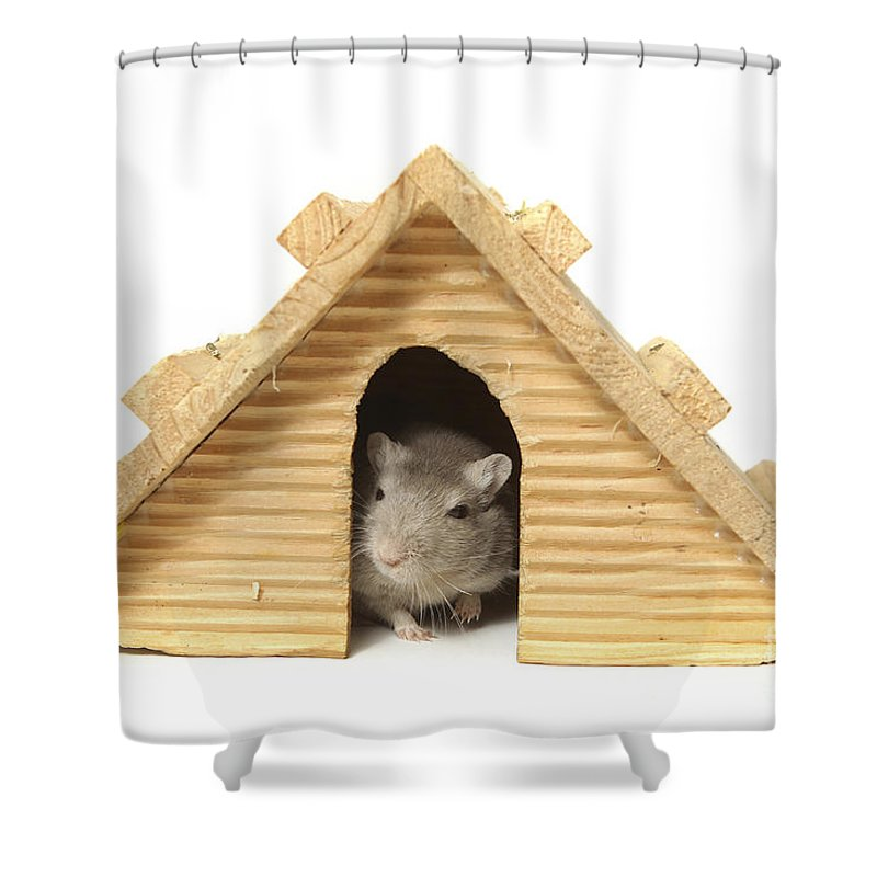Humor Shower Curtain featuring the photograph Successful Mouse by Yedidya yos mizrachi