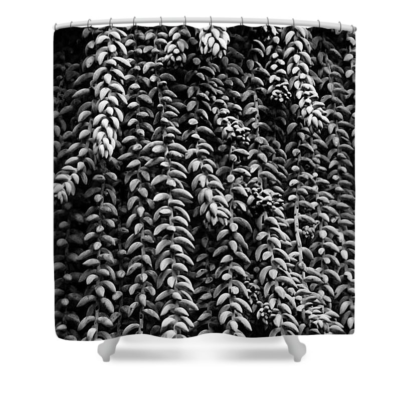 Sedum Shower Curtain featuring the photograph Succulent 4 by Xueling Zou