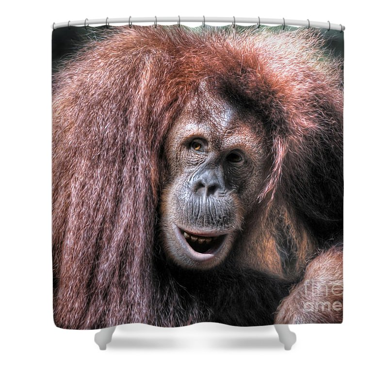 Sumatran Orangutan (pongo Abelii) Shower Curtain featuring the photograph Sumatran Orangutan by Savannah Gibbs