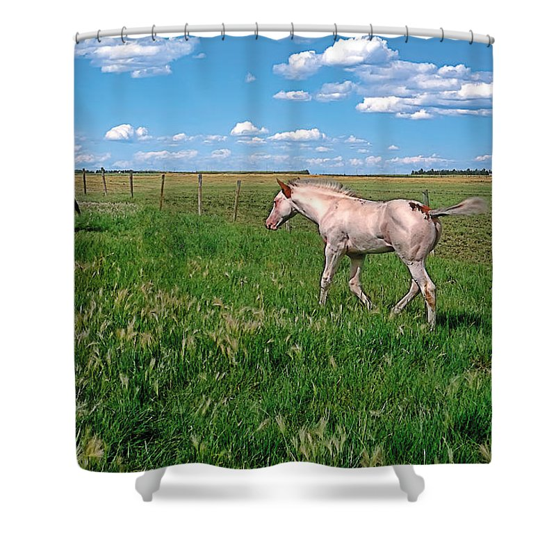 Scenic Shower Curtain featuring the painting Summer Colt by Terry Reynoldson