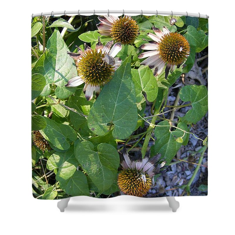Photography Shower Curtain featuring the photograph Summer Is Over by Nancy Kane Chapman