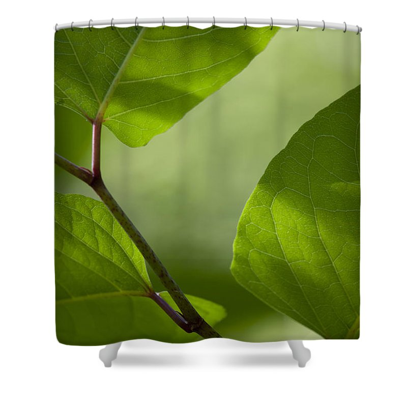 Green Leaves Shower Curtain featuring the photograph Summer Leaves by Steve Gravano