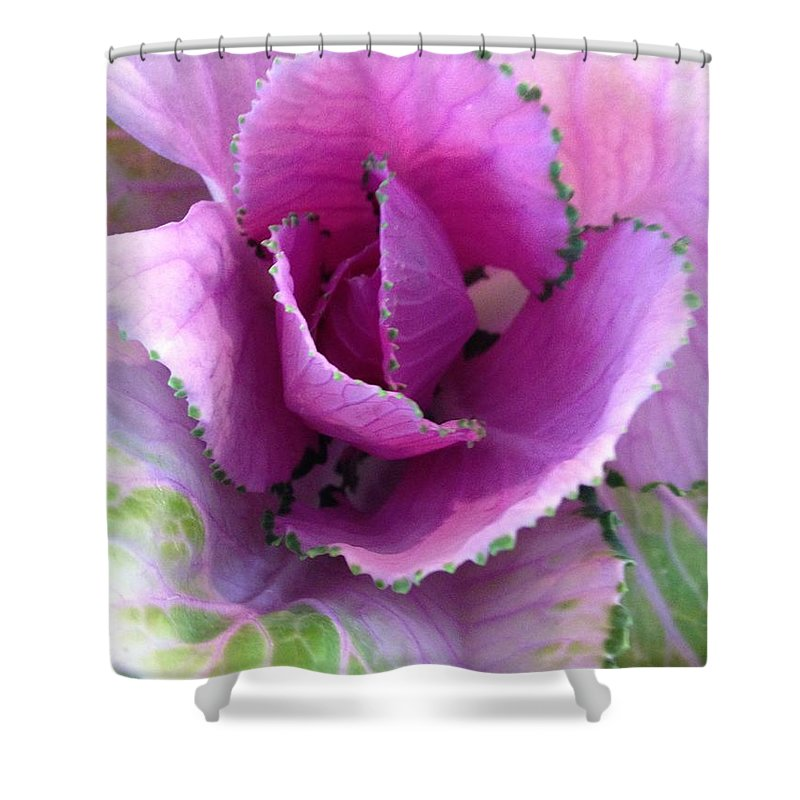Cabbage Shower Curtain featuring the photograph Summer's Cabbage Patch by Marian Palucci-Lonzetta
