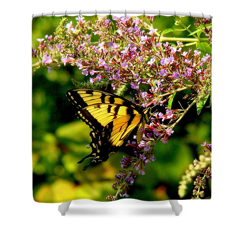 Fine Art Shower Curtain featuring the photograph Summers End by Rodney Lee Williams