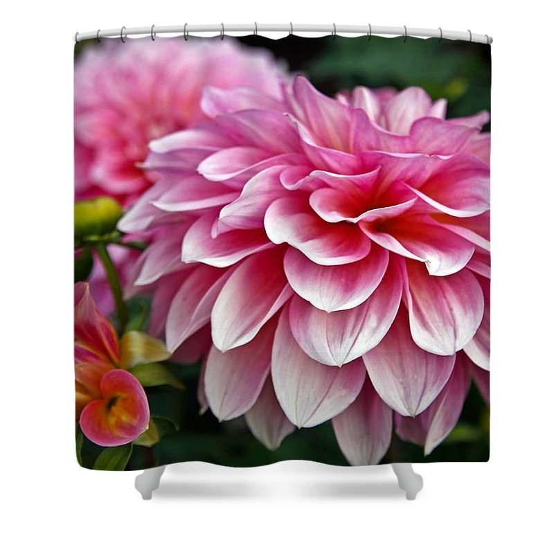 Dahlia Shower Curtain featuring the photograph Summertime Blossoms by Athena Mckinzie