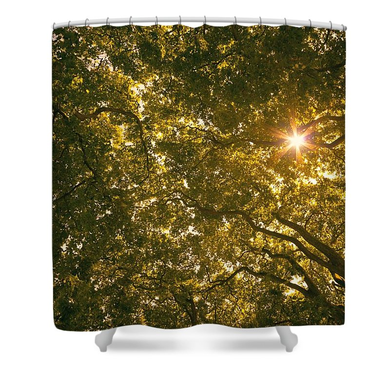 Tree Shower Curtain featuring the photograph Sun In The Trees by Chevy Fleet