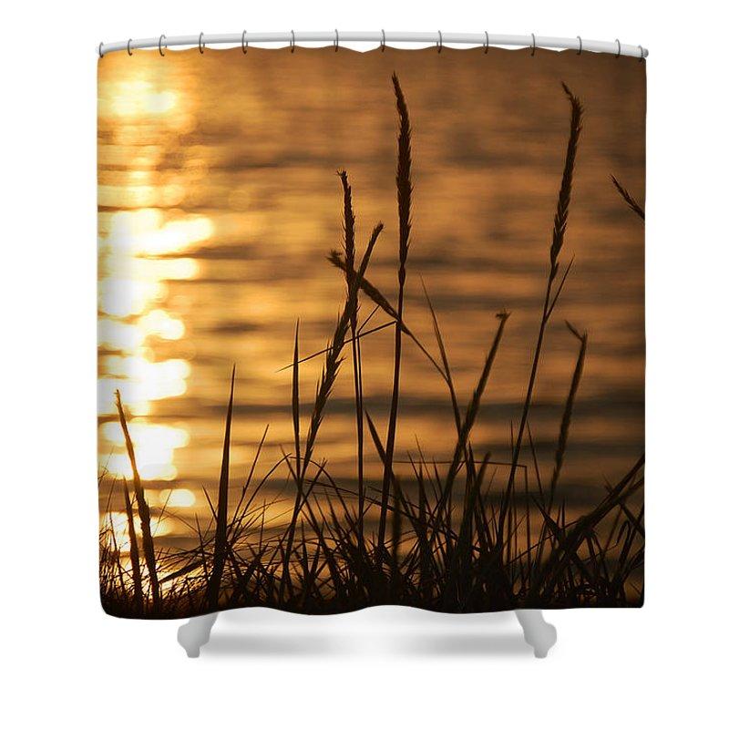 Sun Shower Curtain featuring the photograph Sun Kissed by Leticia Latocki