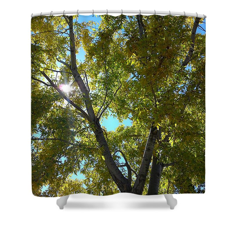 Landscape Shower Curtain featuring the photograph Sun Leaves by Gary Simmons