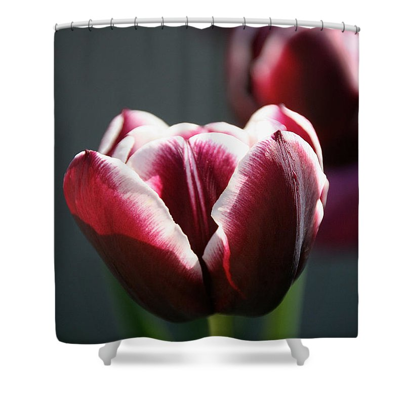 Flower Shower Curtain featuring the photograph Sun Touched by Susan Herber