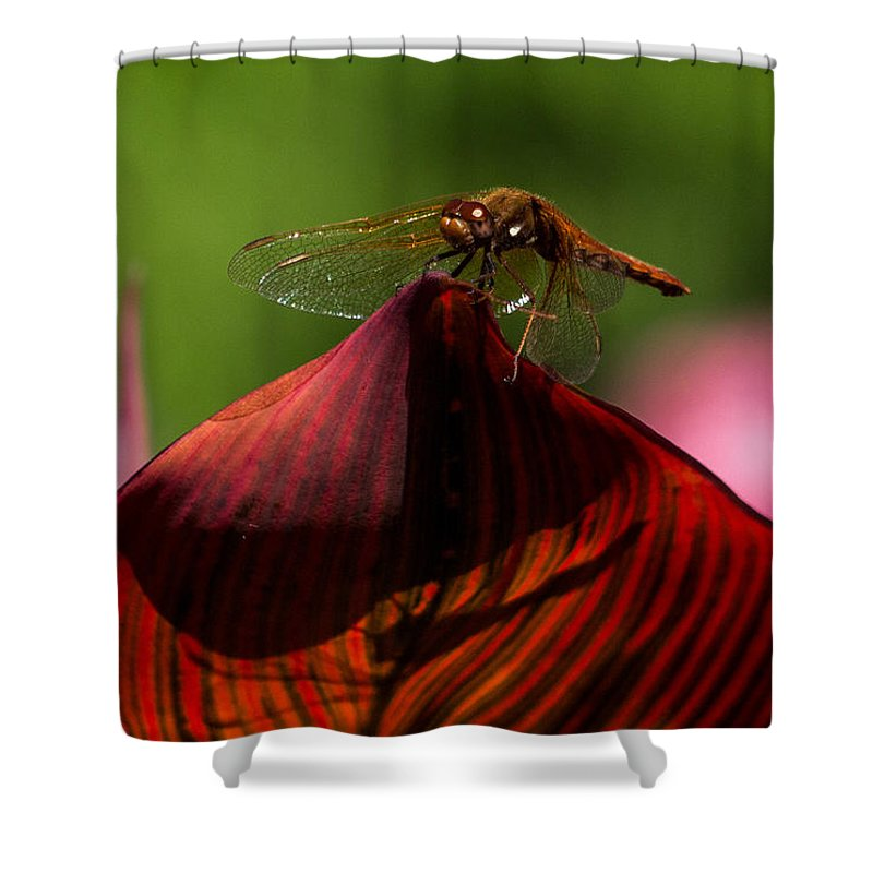 Dragonfly Shower Curtain featuring the photograph Sunbathing Dragonfly by Jordan Blackstone