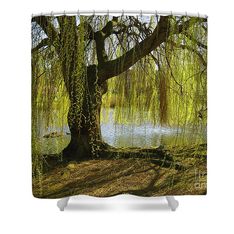 Tree Shower Curtain featuring the photograph Sunday In The Park by Madeline Ellis