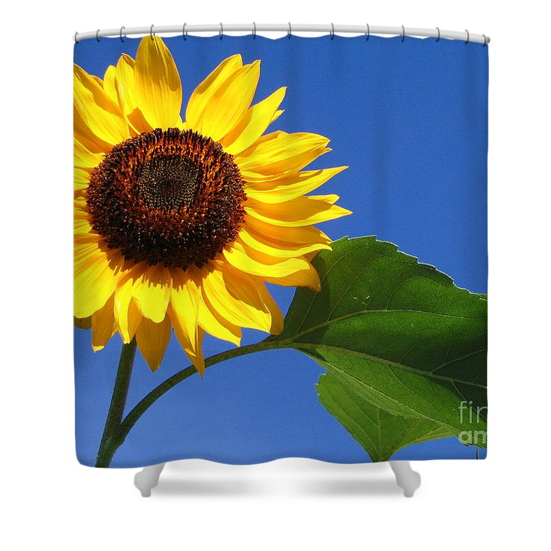 Sunflower Shower Curtain featuring the photograph Sunflower Alone by Line Gagne