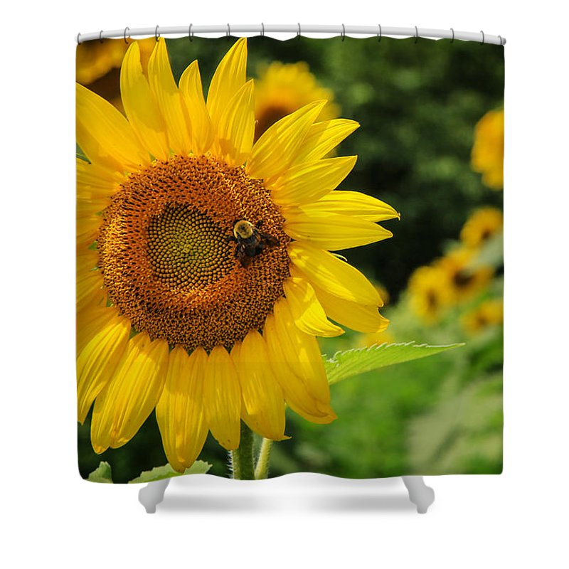 Sunflower Shower Curtain featuring the photograph Sunflower And Bee II by Sharon Horn