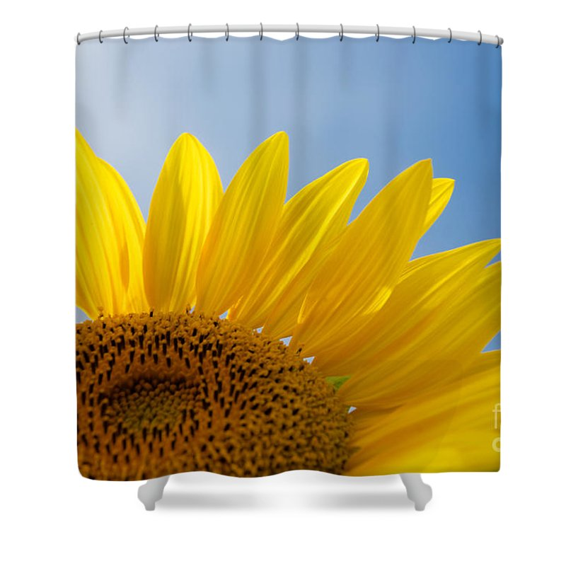 Clear Shower Curtain featuring the photograph Sunflower Looking Up by Mark Dodd
