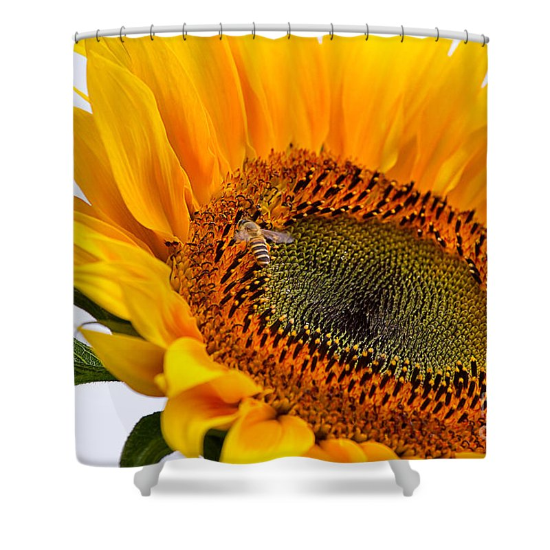 Nature Shower Curtain featuring the photograph Sunflower by Louise Heusinkveld