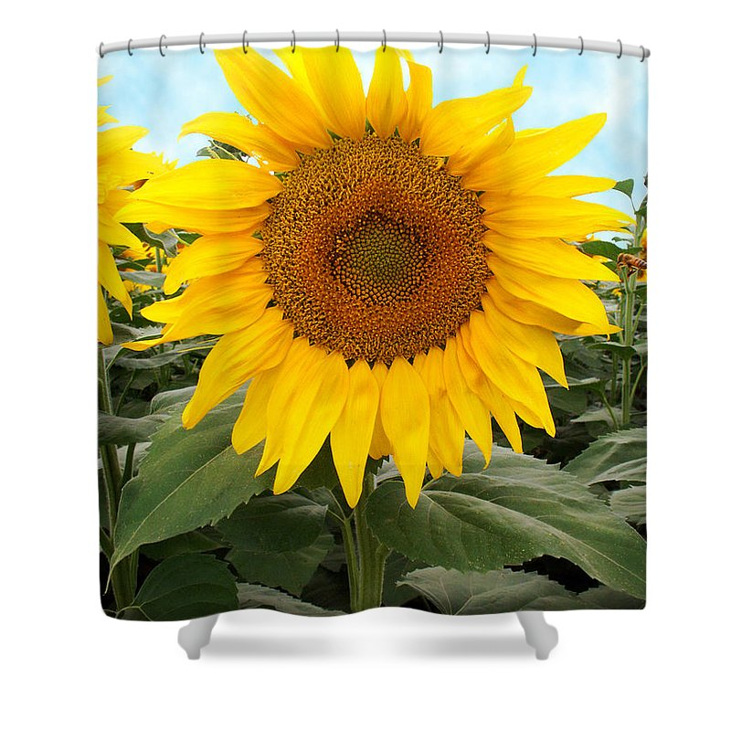 Sunflower Shower Curtain featuring the photograph Sunflower by Marilyn Hunt