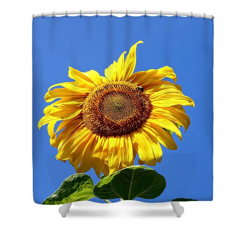 Yellow Shower Curtain featuring the photograph Sunflower by Robert McCulloch