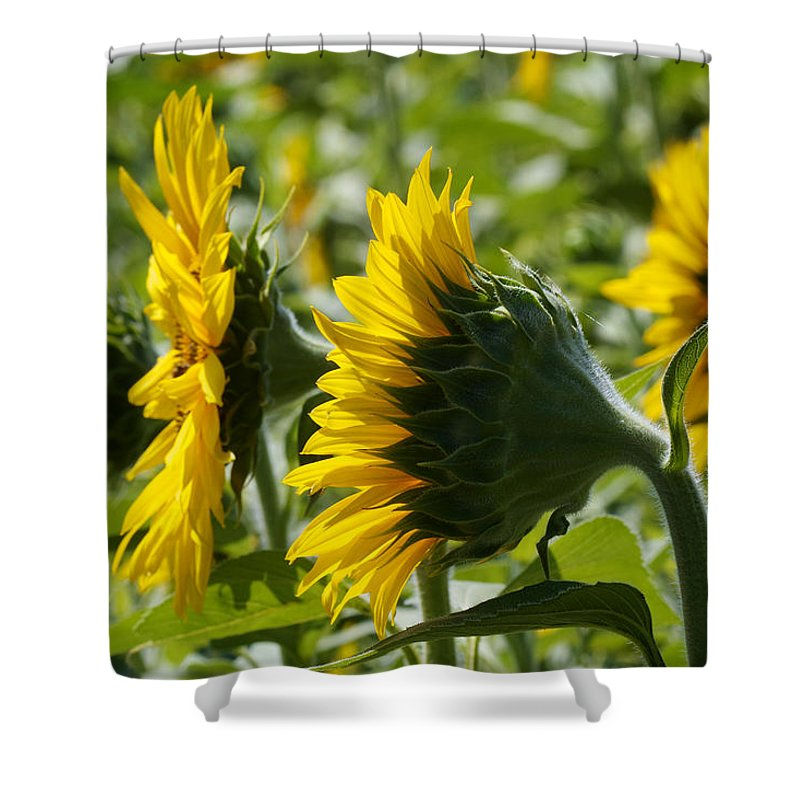 North Carolina Shower Curtain featuring the photograph Sunflower Symphony by David Beebe
