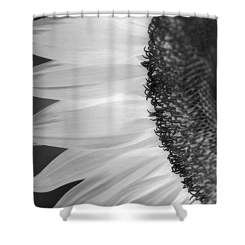 Sunflower Shower Curtain featuring the photograph Sunflowers Beauty Black And White by Sandi OReilly