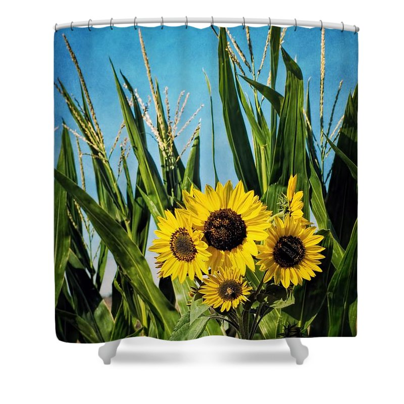 Autumn Shower Curtain featuring the photograph Sunflowers In The Corn Field by Peggy Hughes