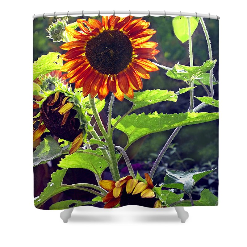 Nature Shower Curtain featuring the photograph Sunflowers In The Park by Madeline Ellis