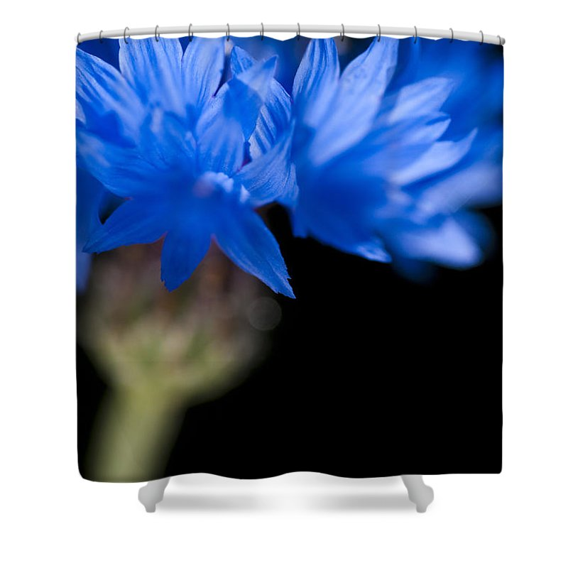 Floral Shower Curtain featuring the photograph Sunkissed Cornflower by Anne Gilbert