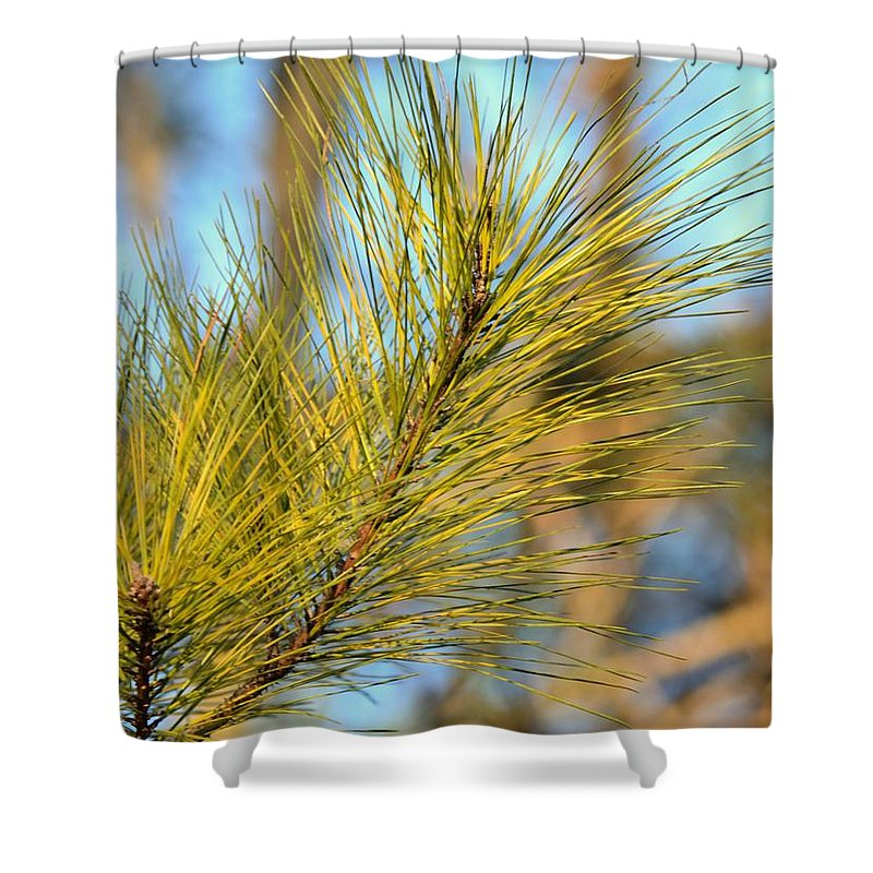 Sunlit Pine Leaders Shower Curtain featuring the photograph Sunlit Pine Leaders by Maria Urso