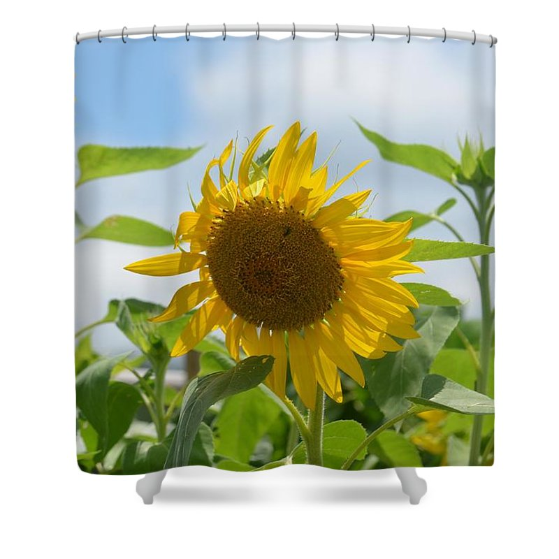 Sunny July 2013 Shower Curtain featuring the photograph Sunny July 2013 by Maria Urso