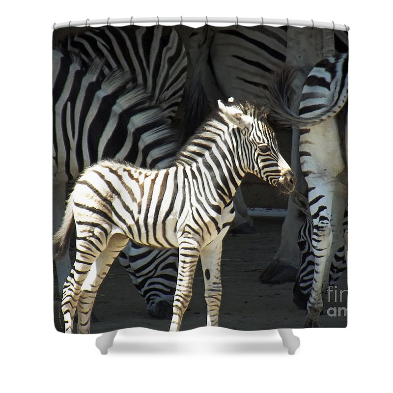 Sunny Zebra Shower Curtain featuring the photograph Sunny Zebra by Methune Hively