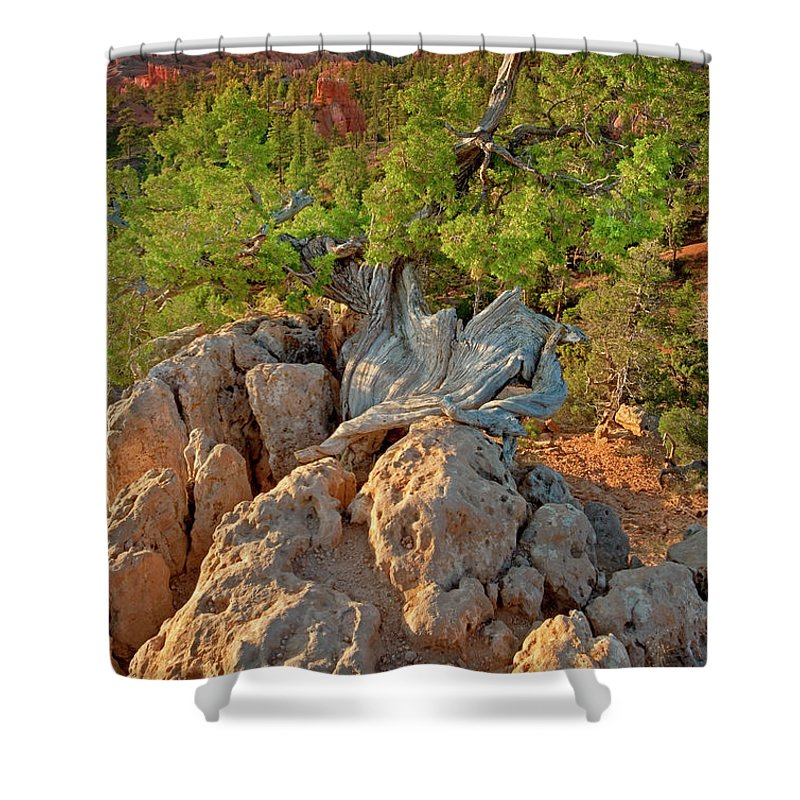 North America Shower Curtain featuring the photograph Sunrise At Bryce Canyon National Park Utah by Dave Welling