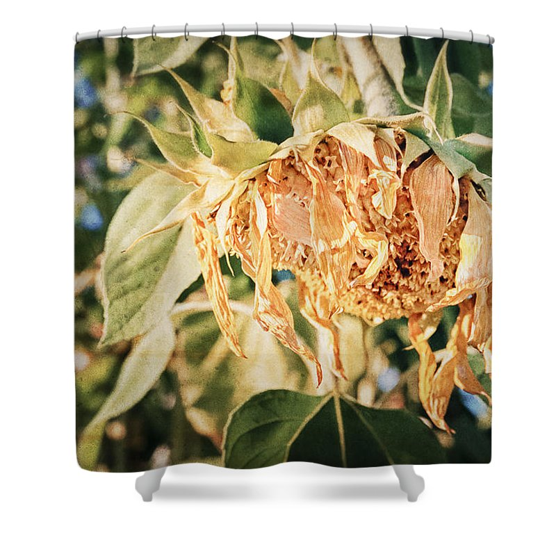 Flower Shower Curtain featuring the photograph Sunset by Caitlyn Grasso