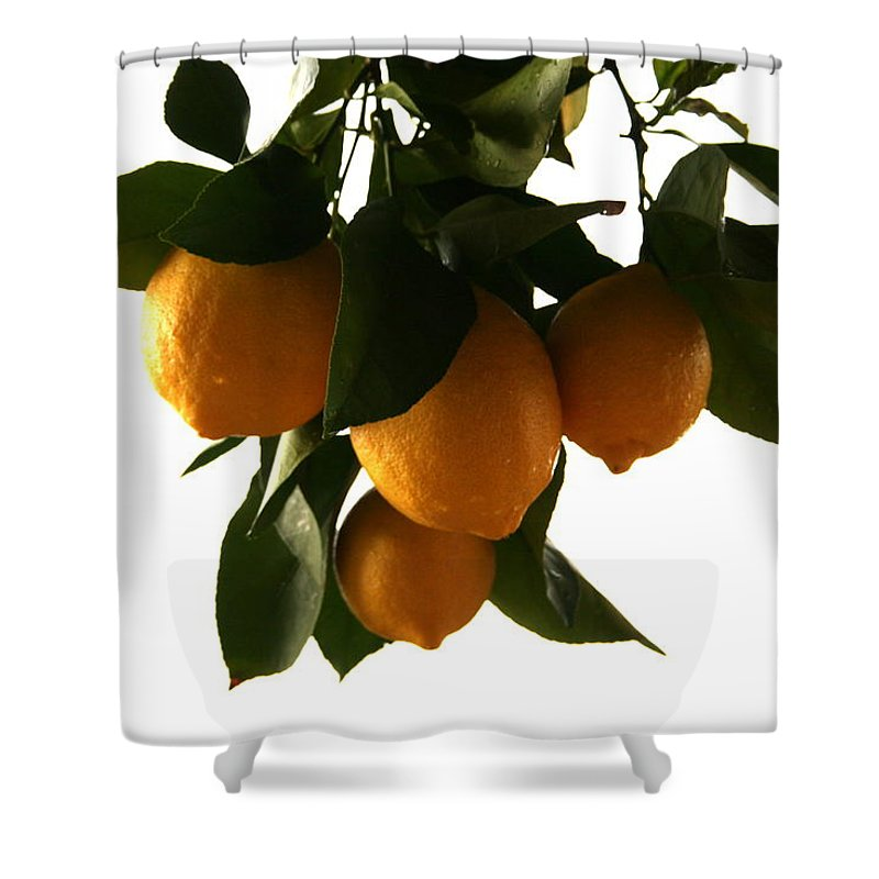 Sunset Shower Curtain featuring the photograph Sunset Lemons by Marna Edwards Flavell