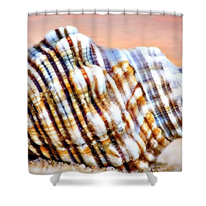 Seashell Shower Curtain featuring the photograph Sunset Seashell by Ben Yassa