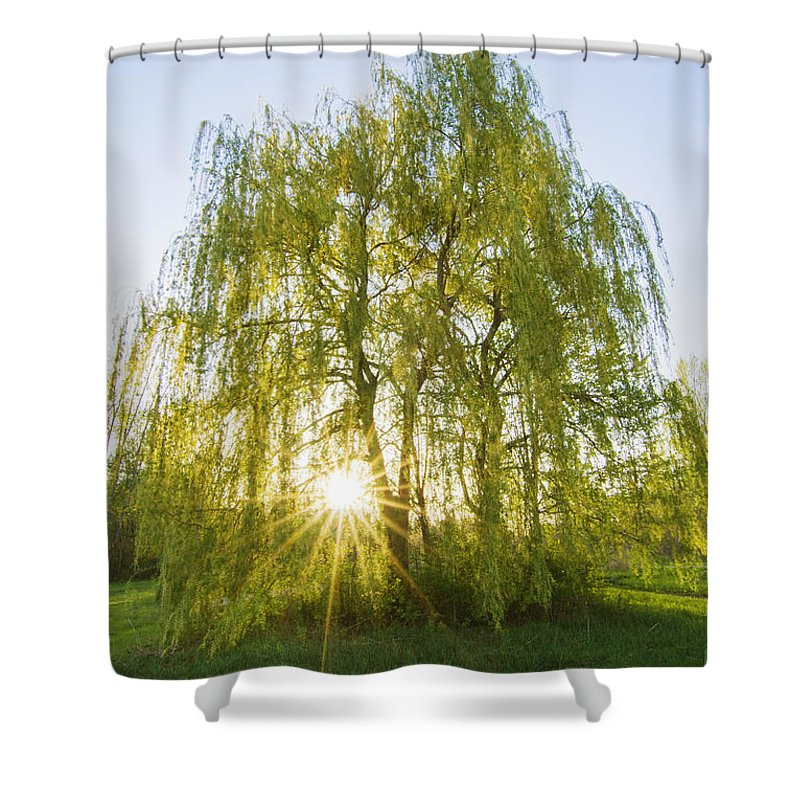 Autumn Shower Curtain featuring the photograph Sunset Willow by Mircea Costina Photography