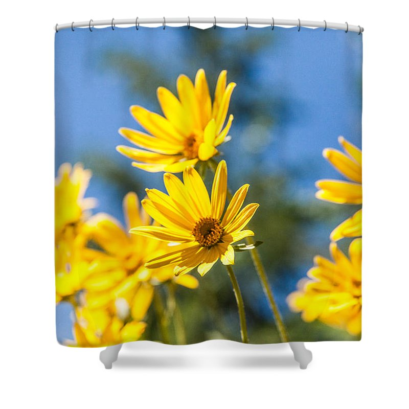Flowers Shower Curtain featuring the photograph Sunshine by Chad Dutson