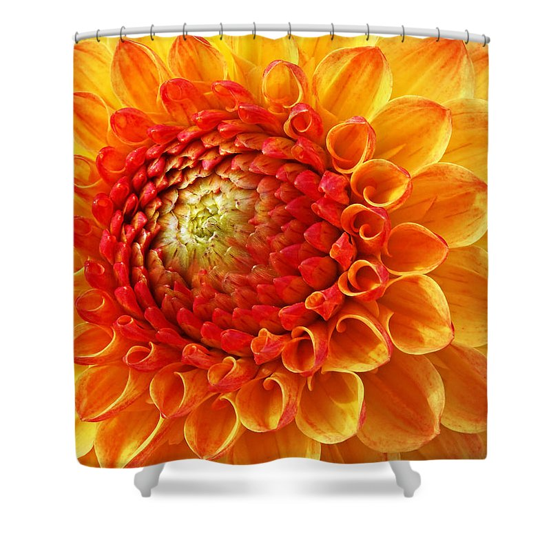 Orange Flower Shower Curtain featuring the photograph Sunshine by Gill Billington