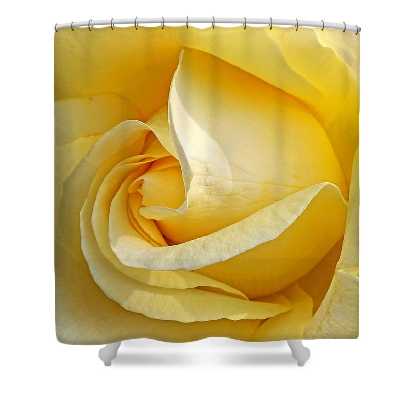 Yellow Rose Shower Curtain Featuring The Photograph Sunshine By Gill Billington